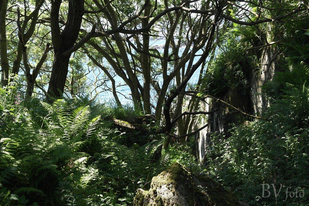 Træer ved stenbruddet