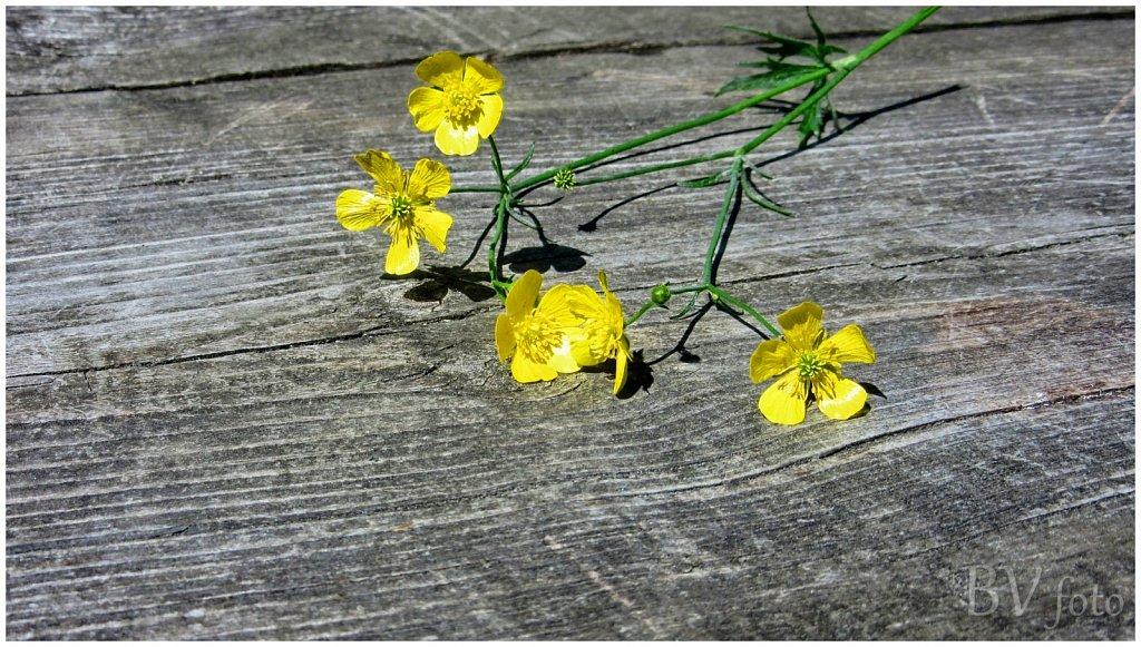 Gule blomster - HDR